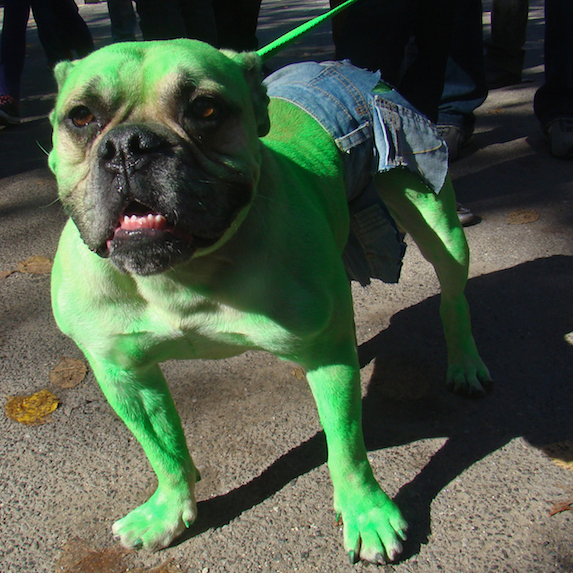 best-halloween-pet-costumes-hulk