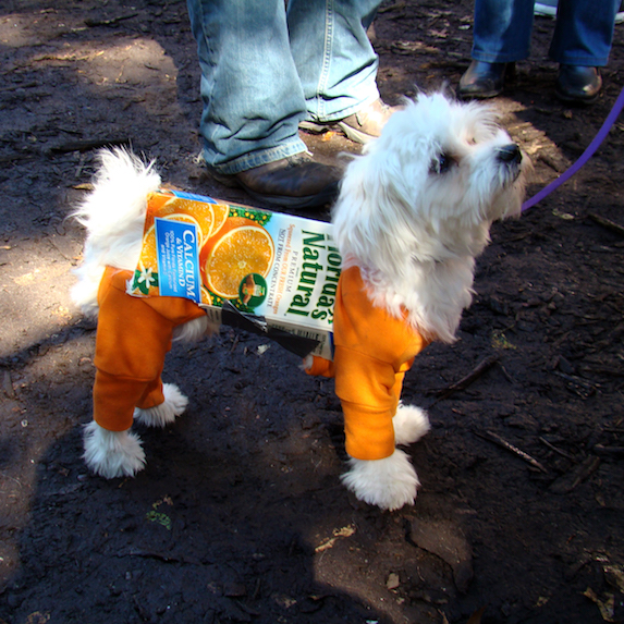 best-halloween-pet-costumes-orange-juice