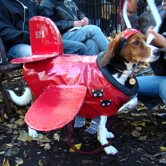 best-halloween-pet-costumes-red-baron