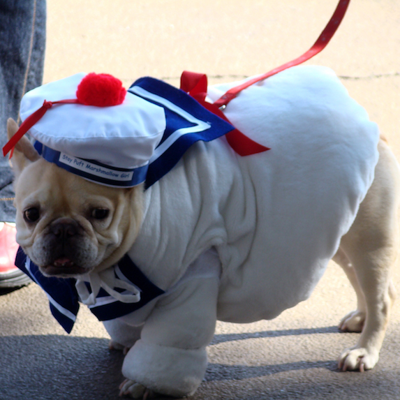 best-halloween-pet-costumes-marshmallow