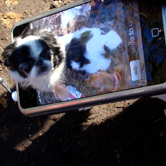 best-halloween-pet-costumes-iPhone