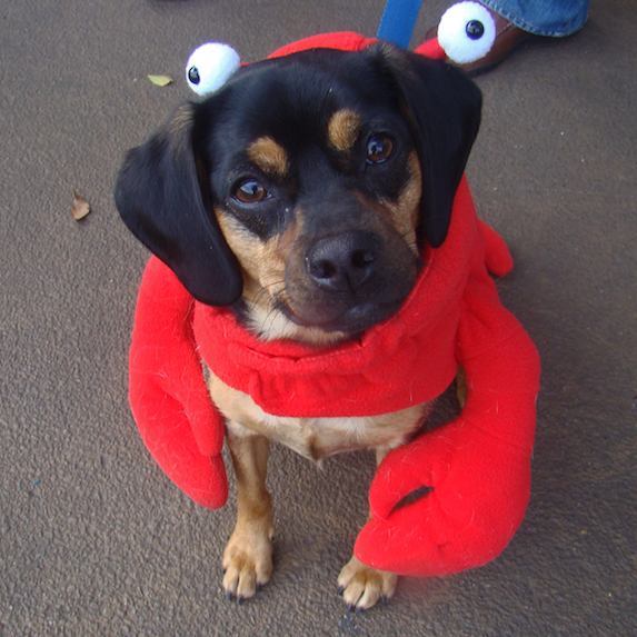 best-halloween-pet-costumes-crab