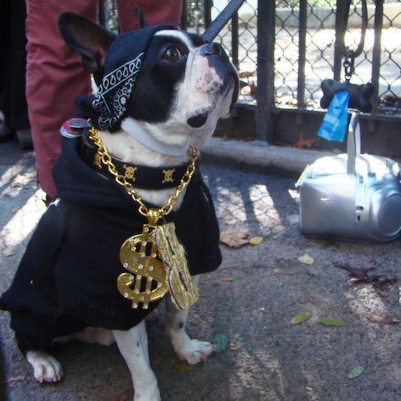 best-halloween-pet-costumes-rapper