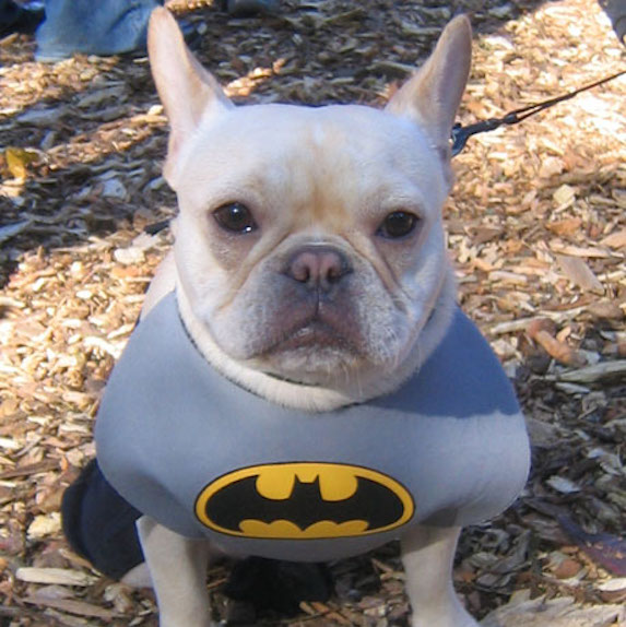 best-halloween-pet-costumes-batman