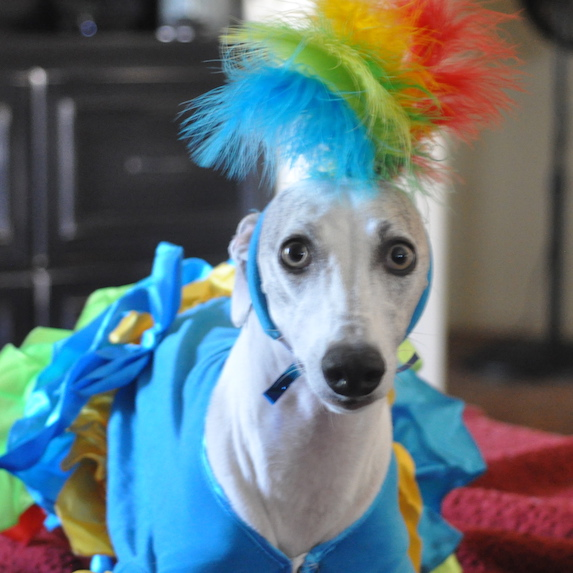 best-halloween-pet-costumes-dancer