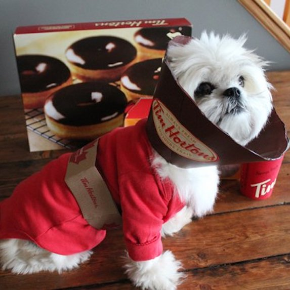 best-halloween-pet-costumes-tim-hortons