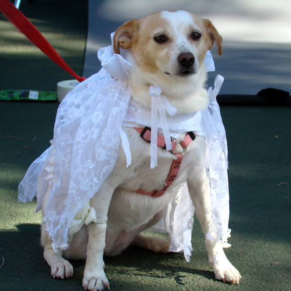 best-halloween-pet-costumes-bride