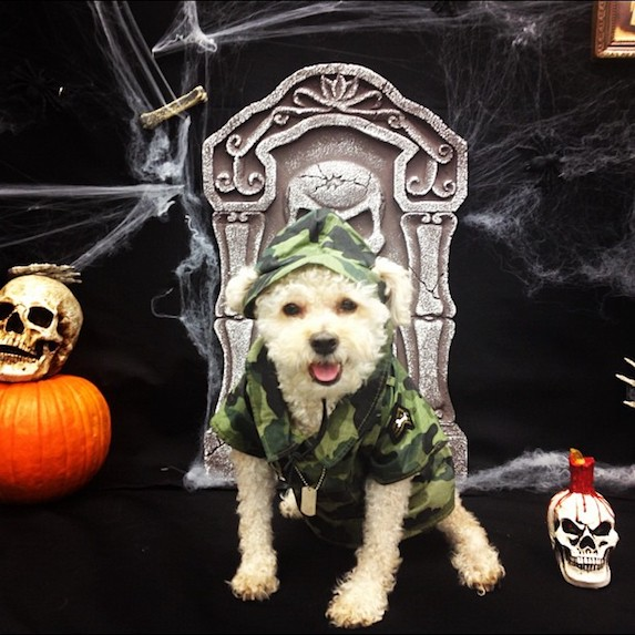 best-halloween-pet-costumes-soldier