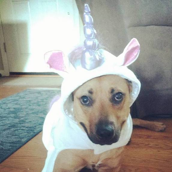 best-halloween-pet-costumes-unicorn