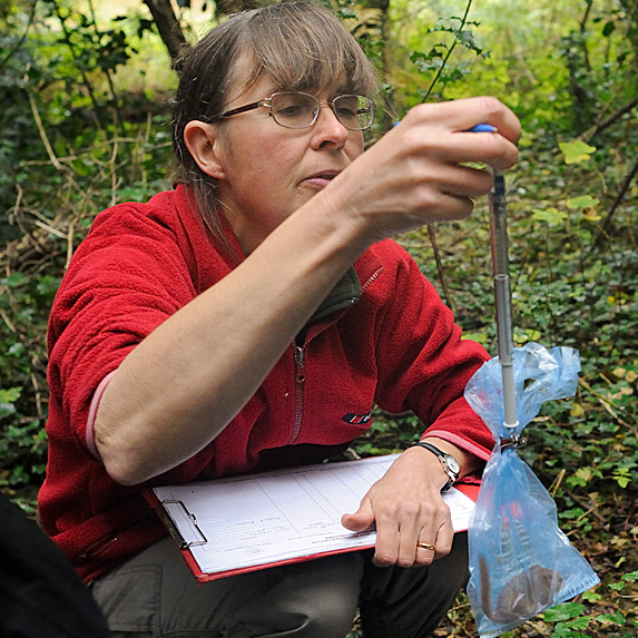 Woman studying findings in forest