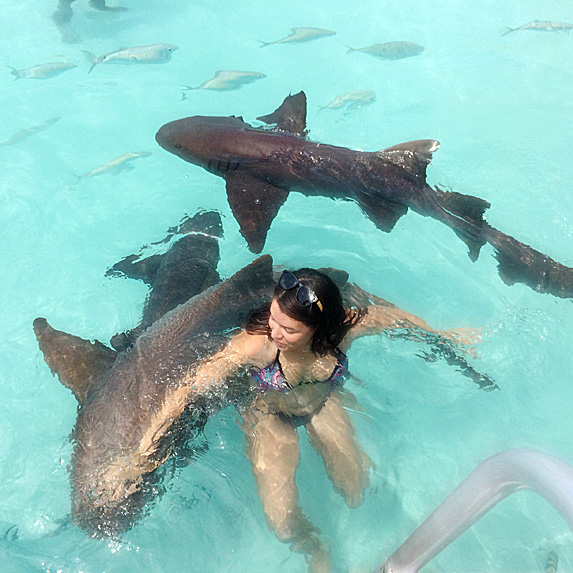 Sharks swimming around woman