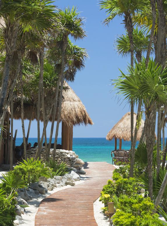 A walkway to the beach through beautiful tropical foliage