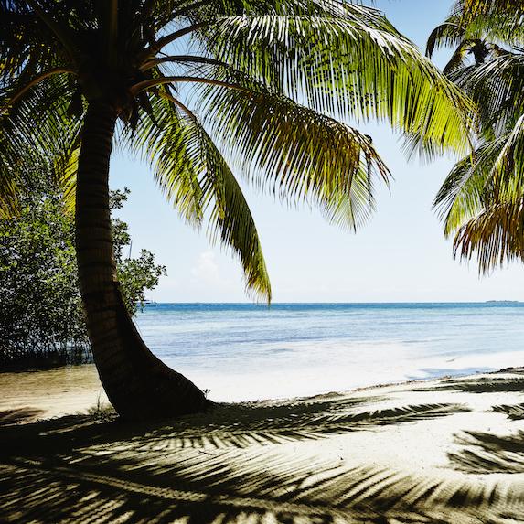 palm tree on beach in Coronado, Panama