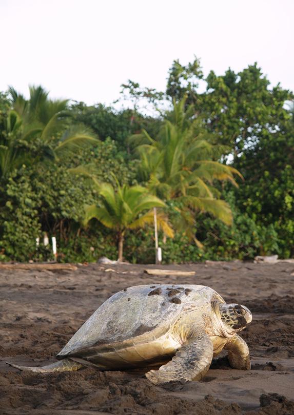 Limon Province, Costa Rica in June