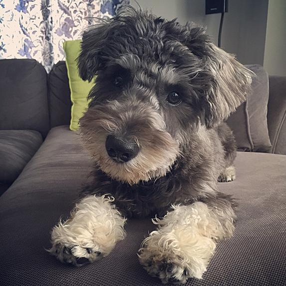 cute unique male boy dog names baxter