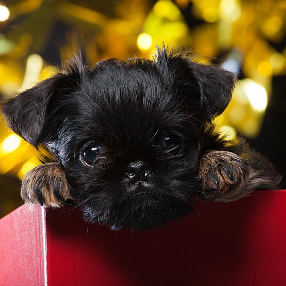 cute unique female girl dog names bella