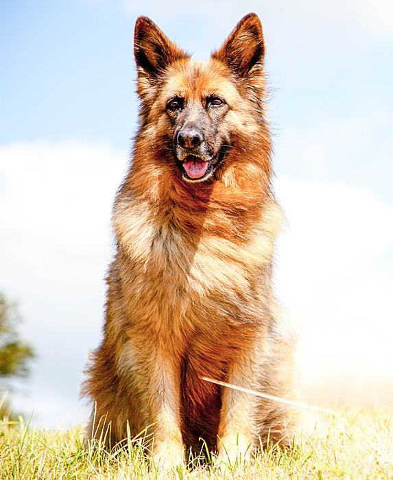 cute unique male boy dog names bo