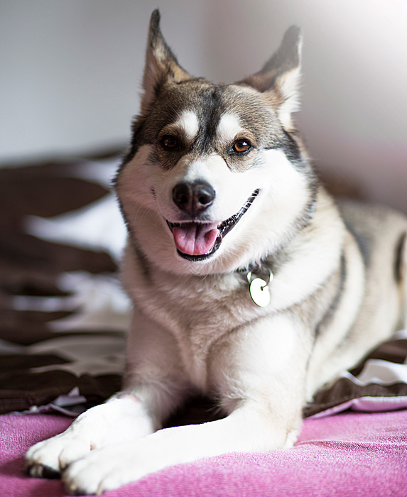cute unique male boy dog names buster