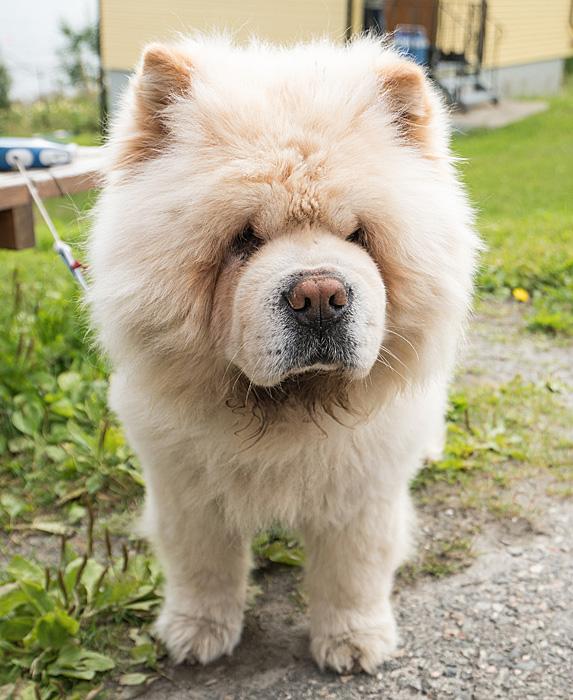 cute unique female girl dog names cleo