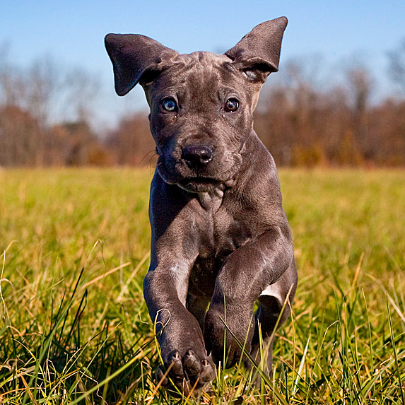 cute unique male boy dog names duke