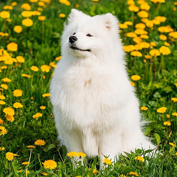 cute unique female girl dog names luna
