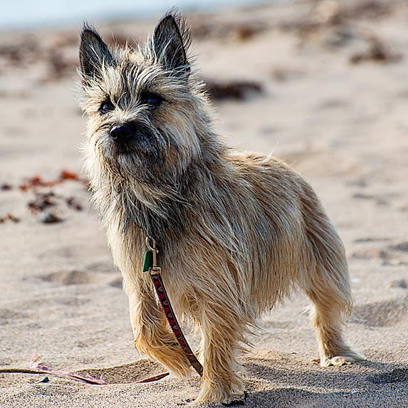 cute unique male boy dog names max