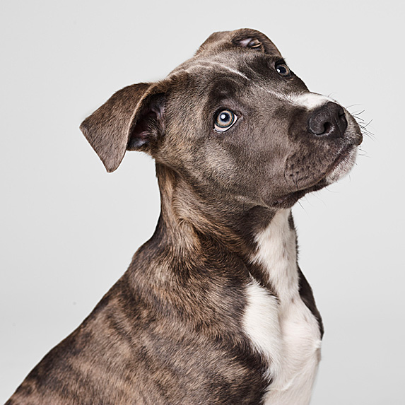 cute unique male boy dog names oscar