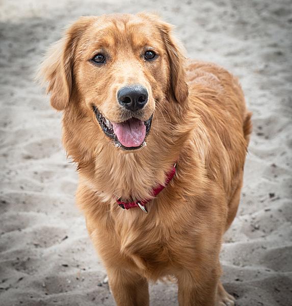 cute unique female girl dog names piper
