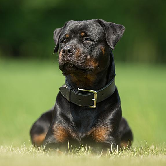 cute unique female girl dog names roxy