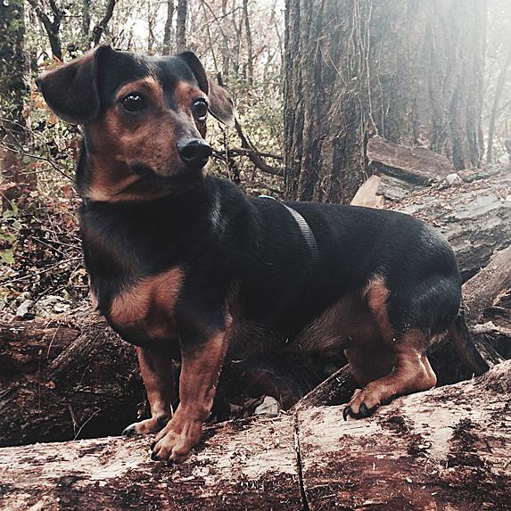 cute unique female boy dog names