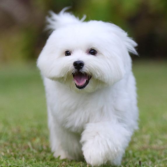 cute unique female girl dog names sadie