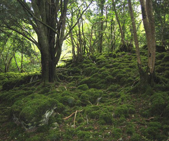 Killarney Provincial Park trail