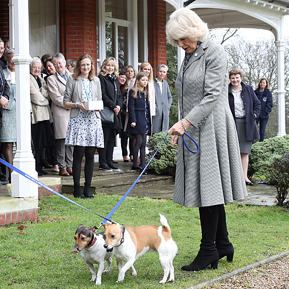 Duchess Camilla and two dogs
