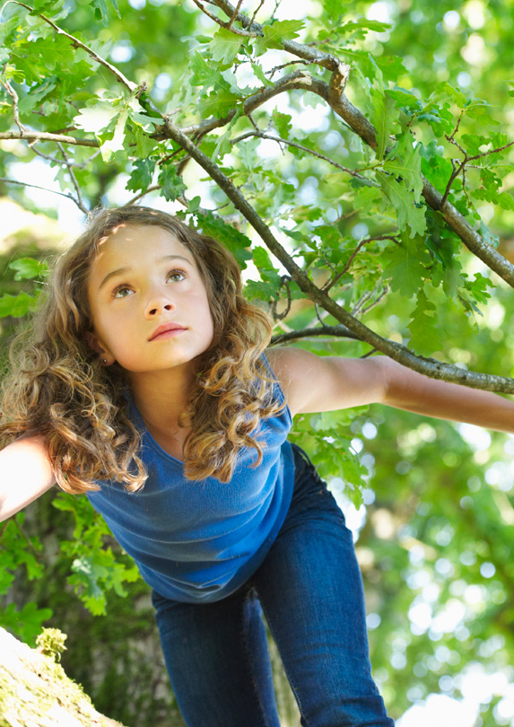 Cambie Climbing Tree, Vancouver, British Columbia