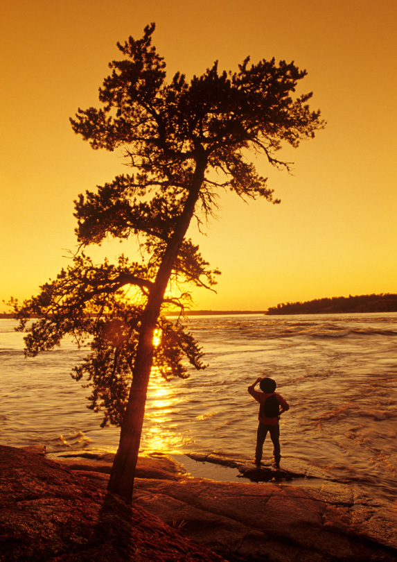 Person under a tree in Whiteshell Provincial Park, Manitoba