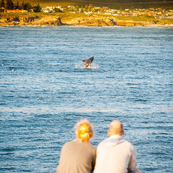 Couple watching a whale in Hermanus, South Africa