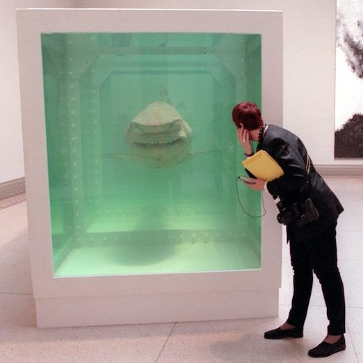 A visitor to a Brooklyn museum looks at an art installation by Damien Hirst