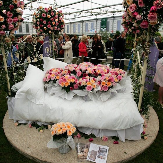 Juliet roses on display at the Chelsea Flower Show