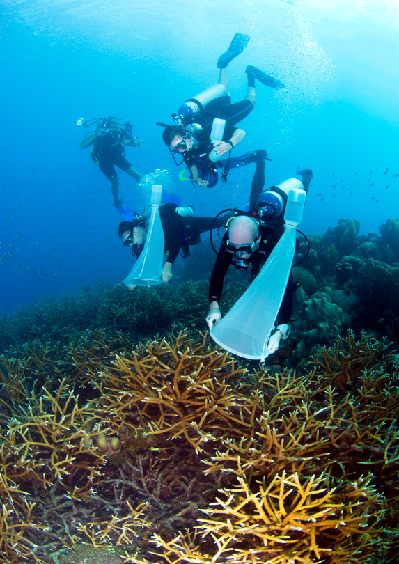 An oceanographer diving