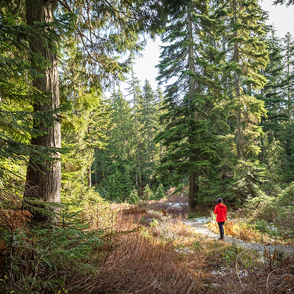 Person walking along a forest trail