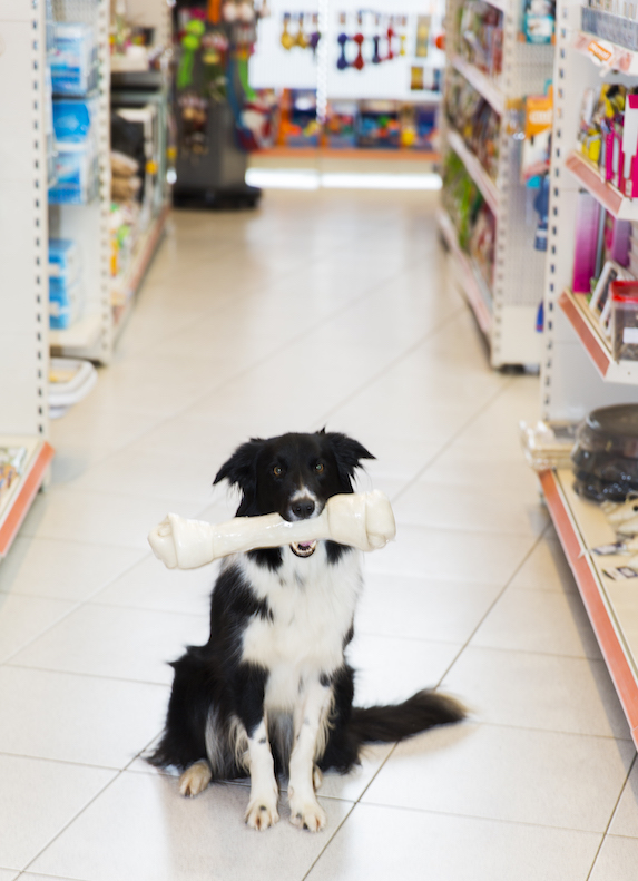 Dog holds a bone in its mouth as it sits in the aisle of a pet store