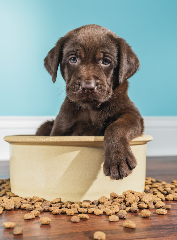 Puppy sits in a large dog food bowl and looks at camera
