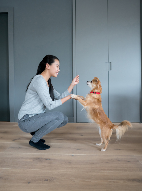 Woman trains her small dog at home