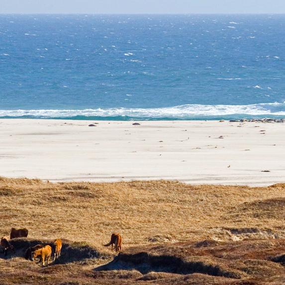 sable island beach