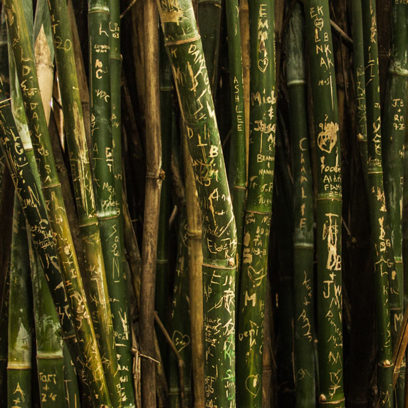literal bamboo