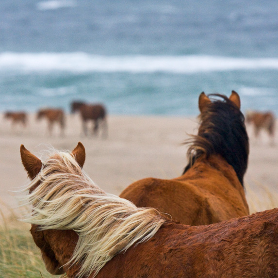 Sable Island National Park Reserve, Nova Scotia