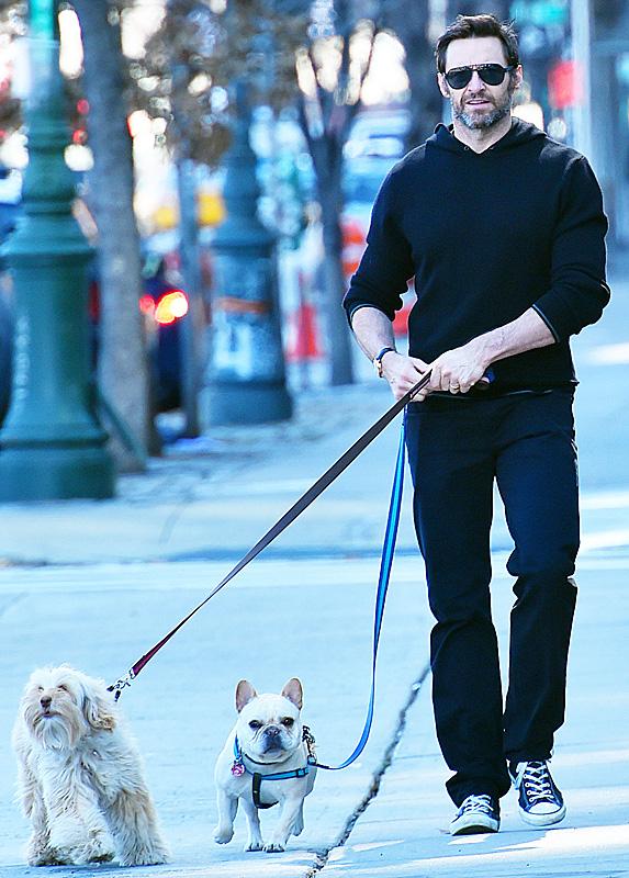 Hugh Jackman and dogs Dali and Allegra