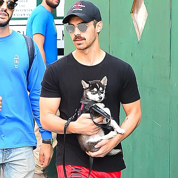 Joe Jonas carrying dog