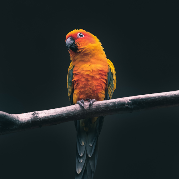 a parrot on a tree branch