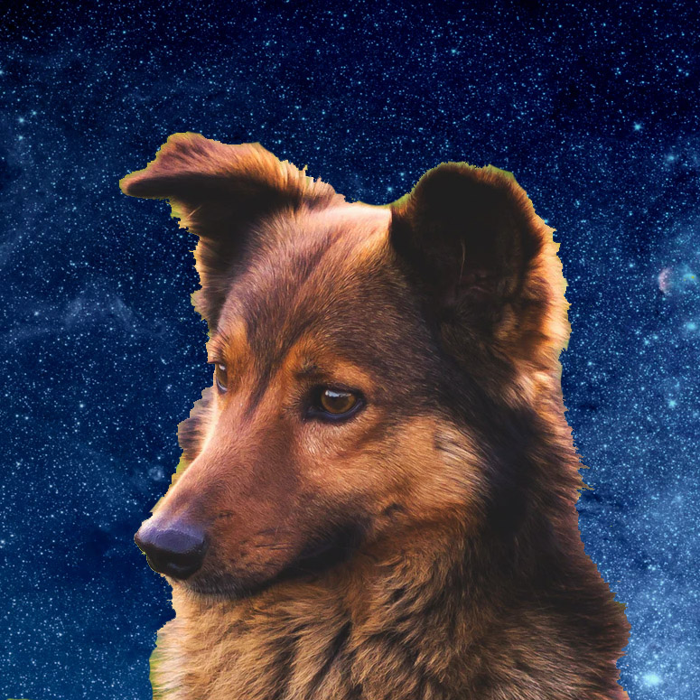 Perfect dog in the cosmos